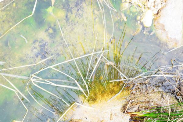 آینه آب