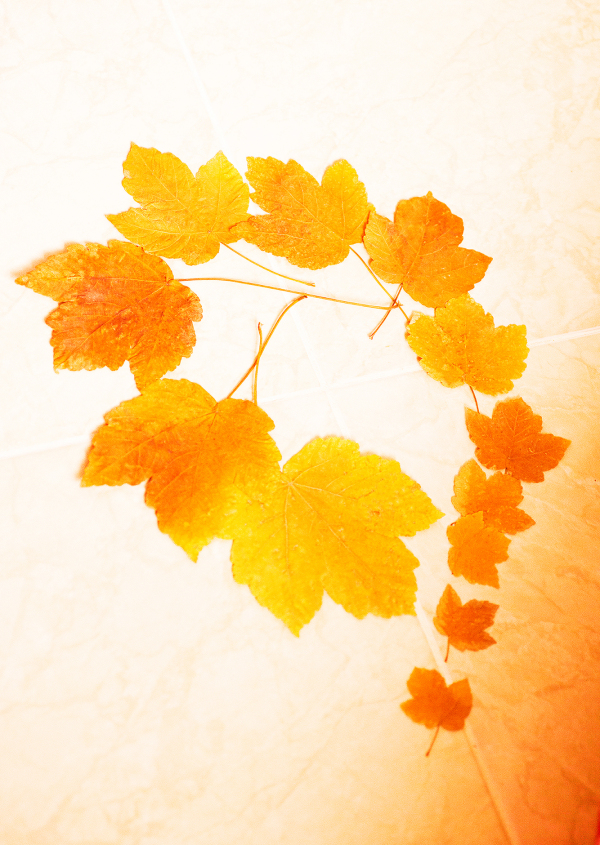 پاییزانه