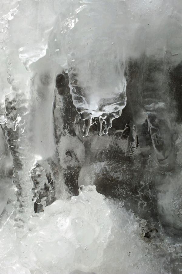 پروانه یخی