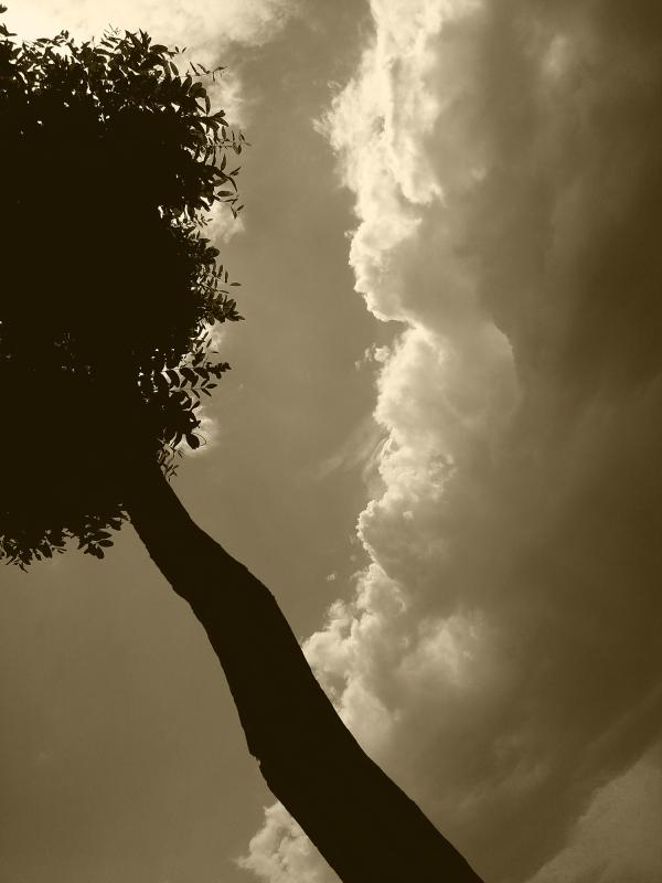 ابر و باد و مه و خورشید و فلک