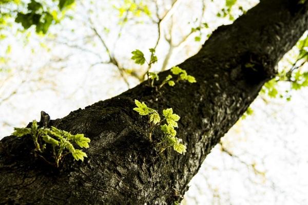 Little Leaves 3