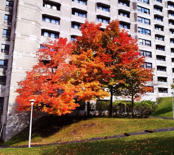 L'automne est venu! 8