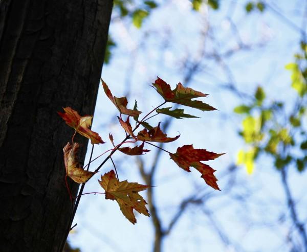 L'automne est venu! 12