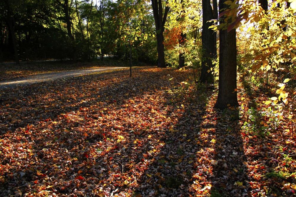 L'automne est venu! 13