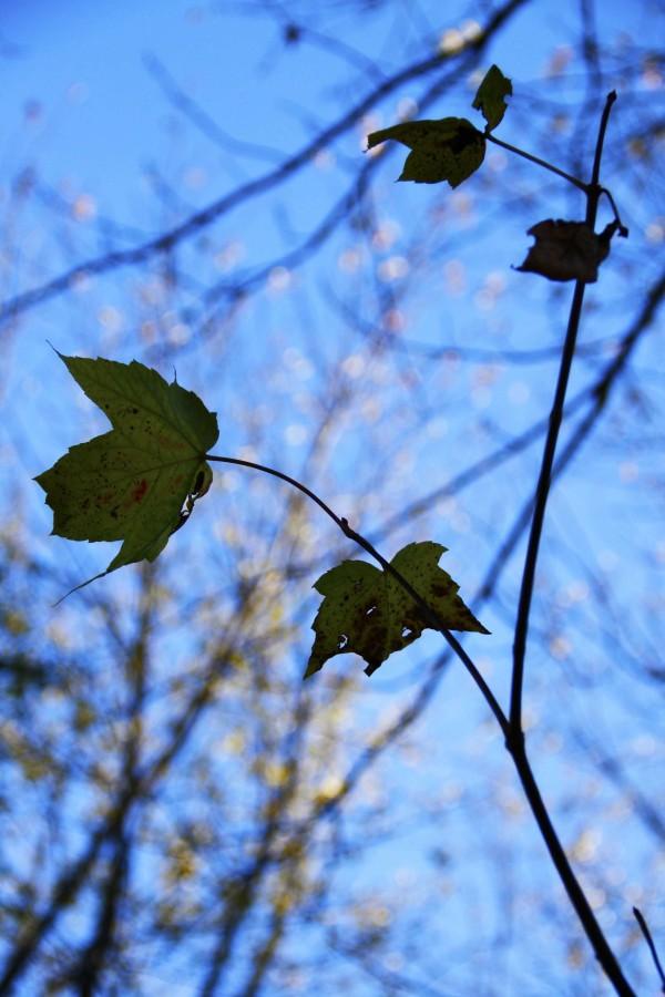 L'automne est venu! 15
