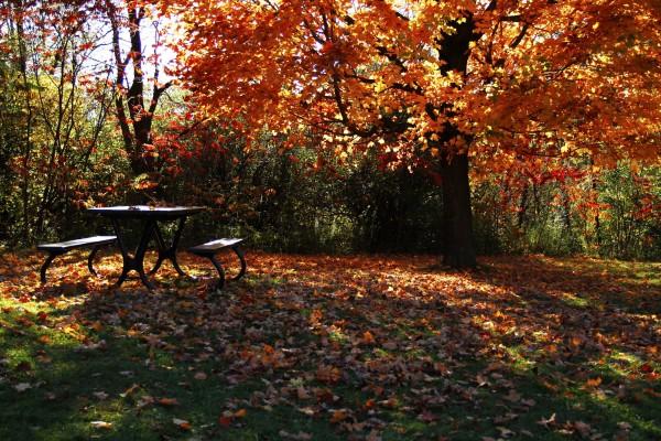 L'automne est venu! 16