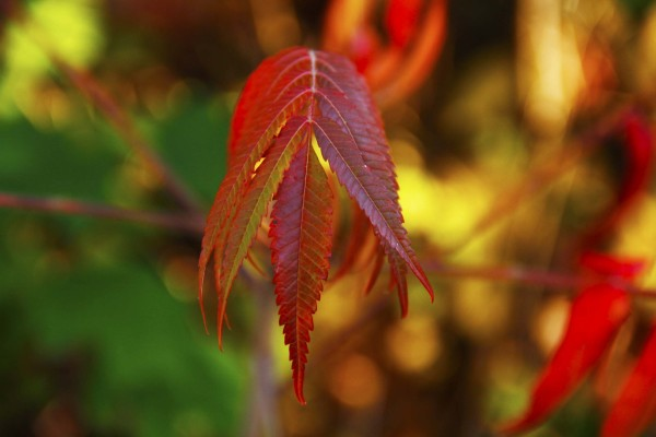 L'automne est venu! 19