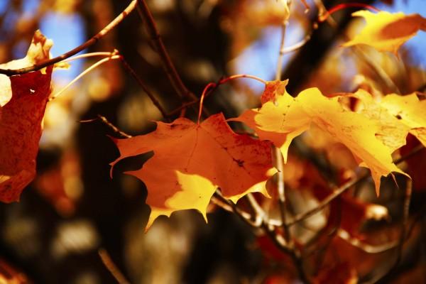 L'automne est venu! 23