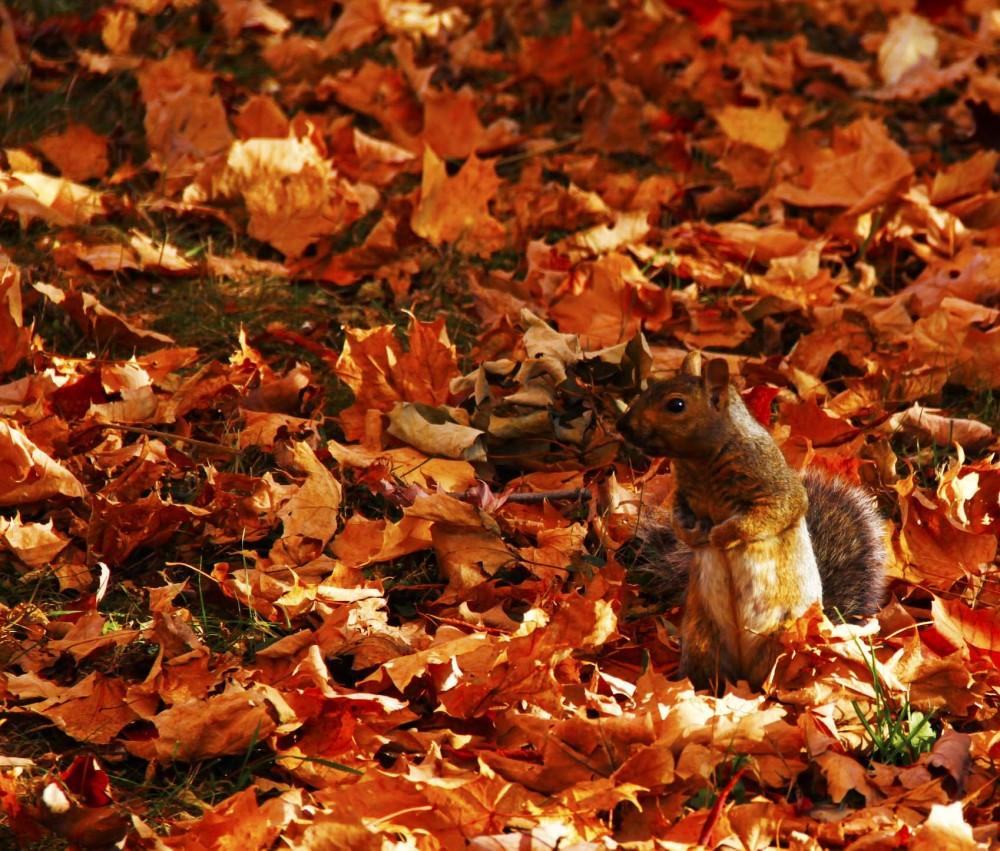 L'automne est venu! 24