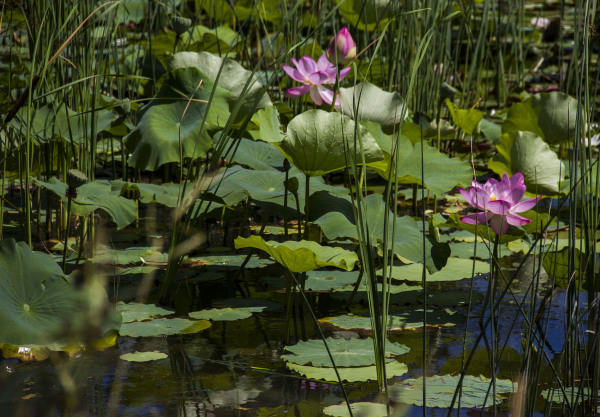 jardin botanique montréal5