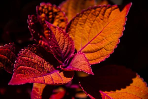 jardin botanique montréal8