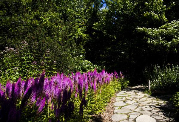 jardin botanique montréal14