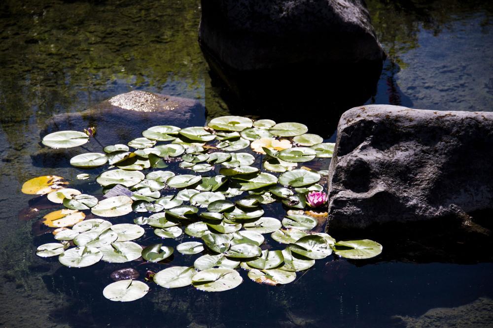 jardin botanique montréal15