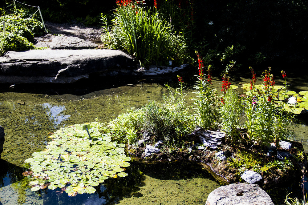 jardin botanique montréal16