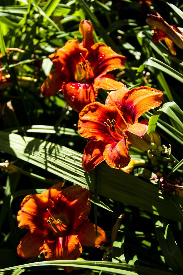 jardin botanique montréal21
