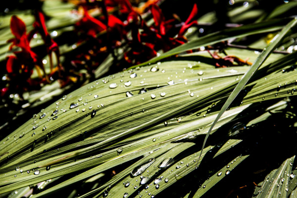 jardin botanique montréal22