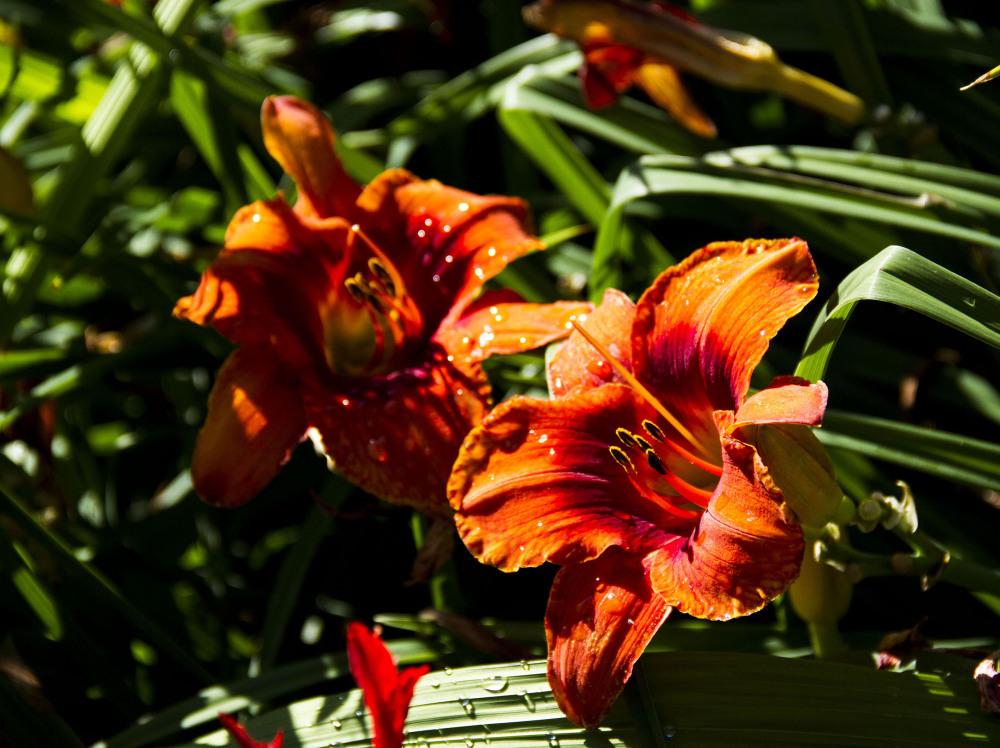 jardin botanique montréal23