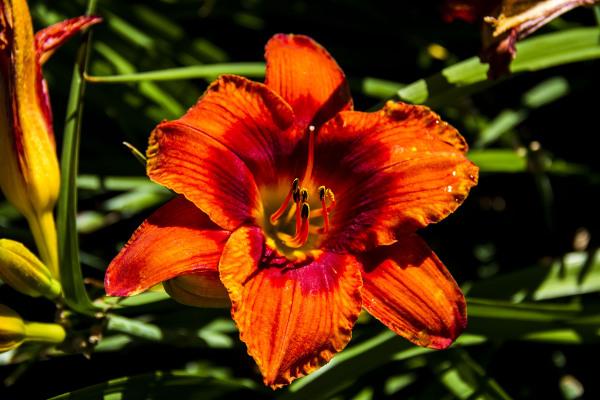 jardin botanique montréal24