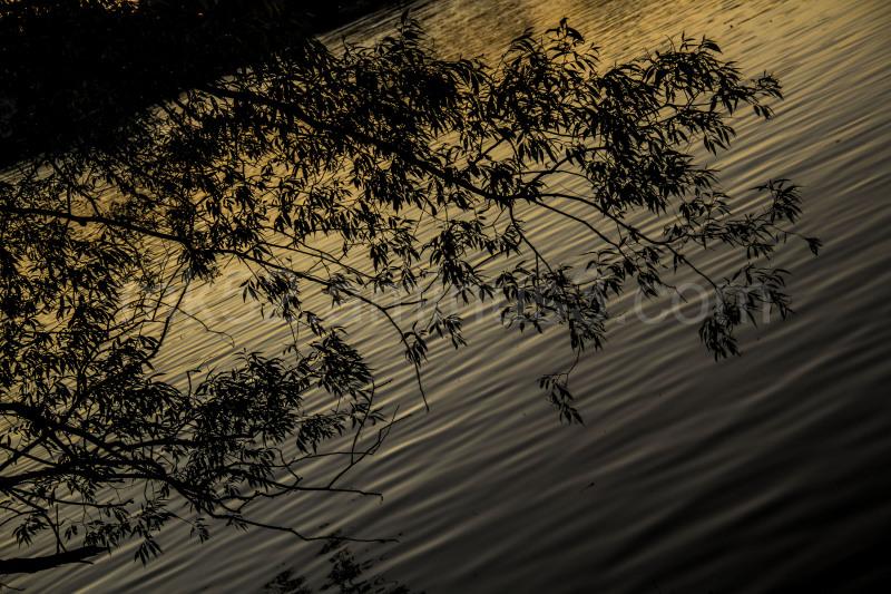 River Side 4