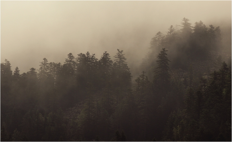 Niebla IV