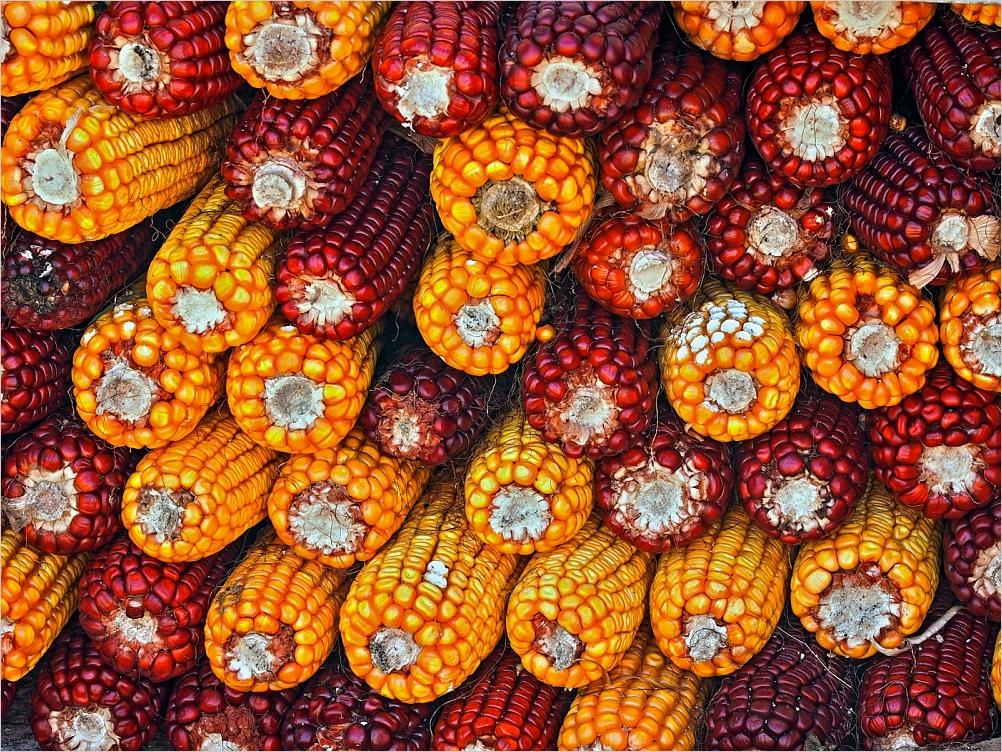 O millo no canastro