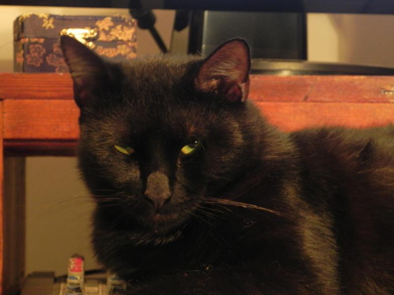 My favorite cat, looking very serious...