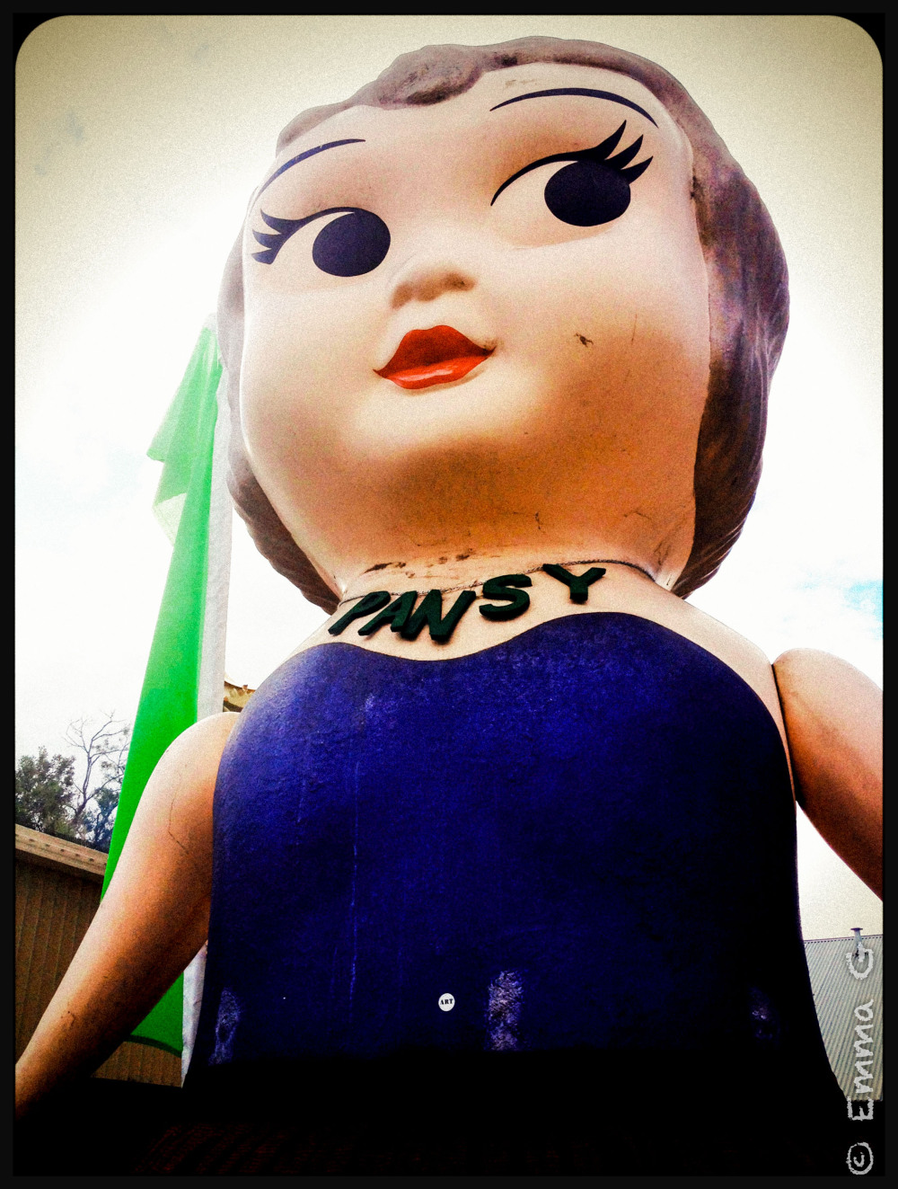 Pansy - Kewpie Doll