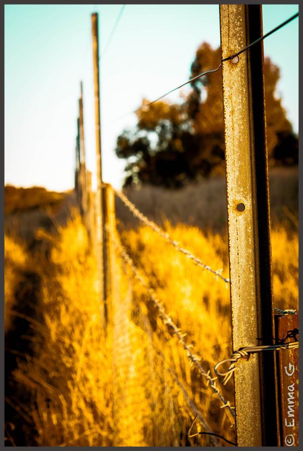 Goorooyarroo Fence