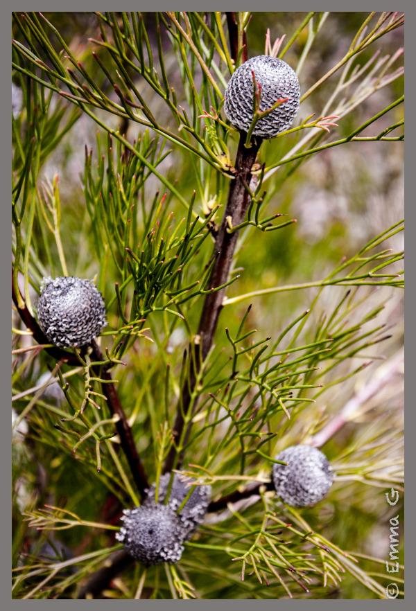 Canberra Botanical Gardens
