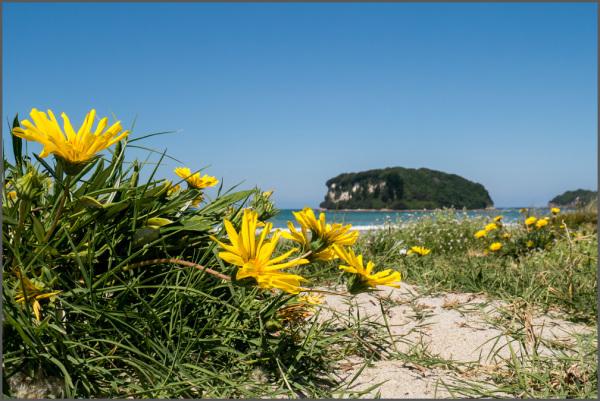 Whangamata Beach