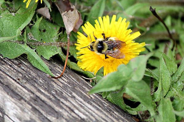 Natures Little Helper