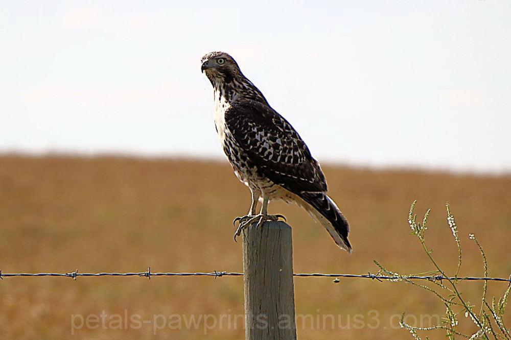 Regal Bird