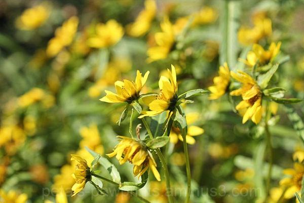 Wall of Wildflowers