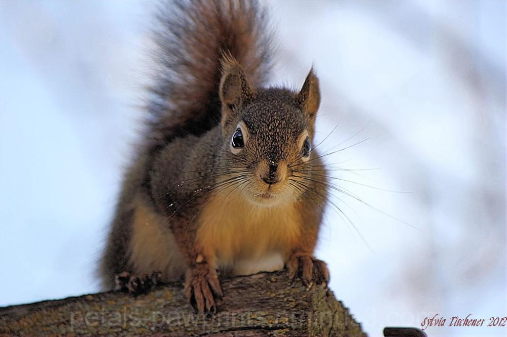 Squirrel With Attitude !