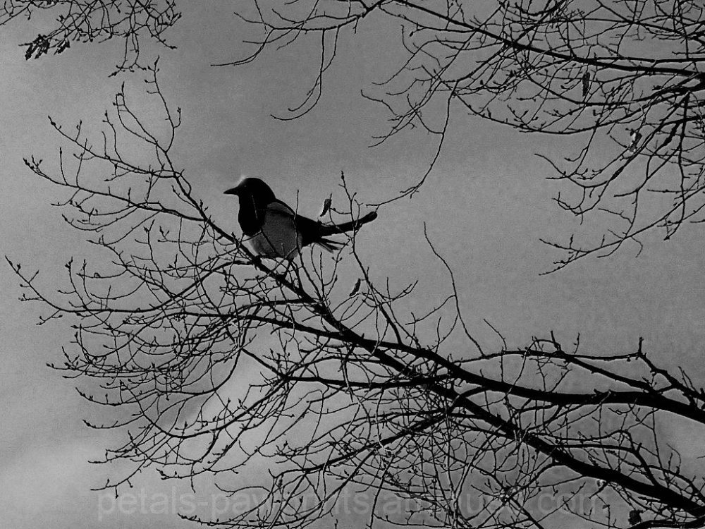 Silhouette of a Scavenger