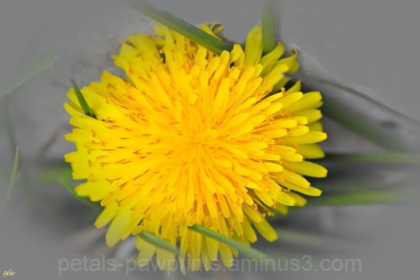 Double Digits and Dandelions