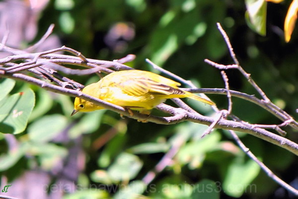 Zen Bird