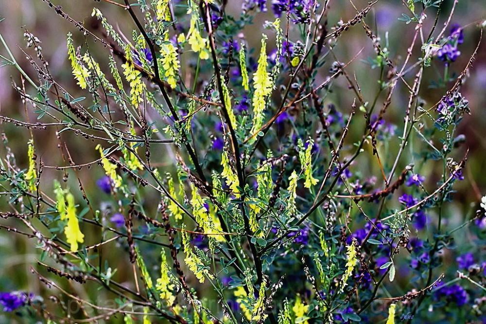 Simply Wild Flowers