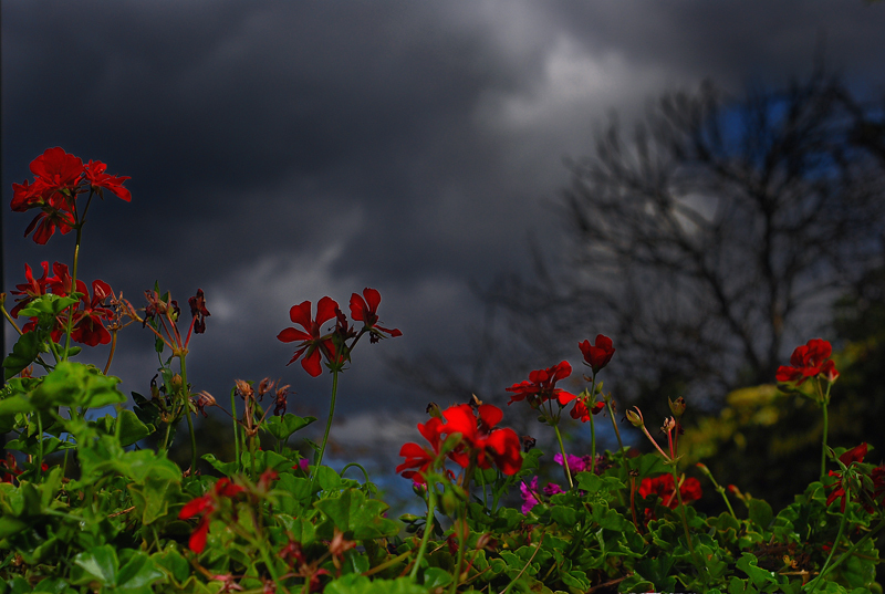 Storm's ahead