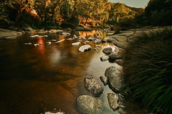 River Dão at Golden Hour