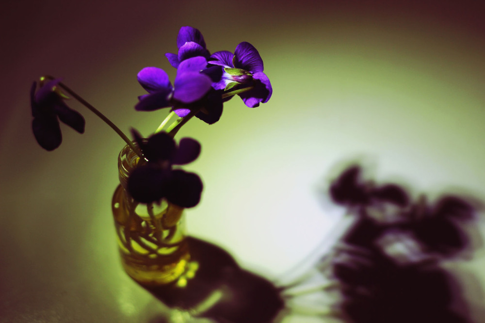 picked violets in a small vase casting a shadow