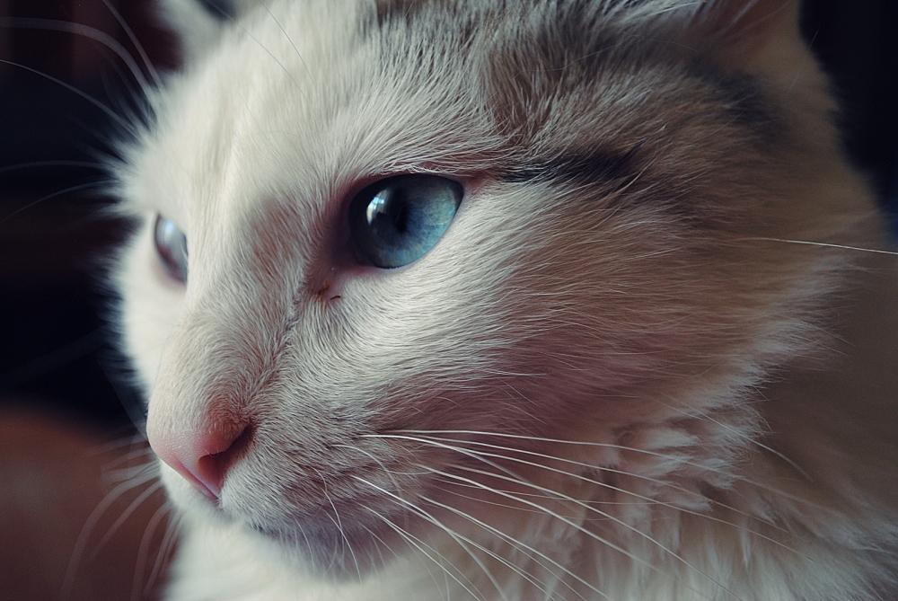 Katina