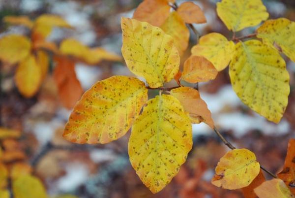 Increibles colores de otoño