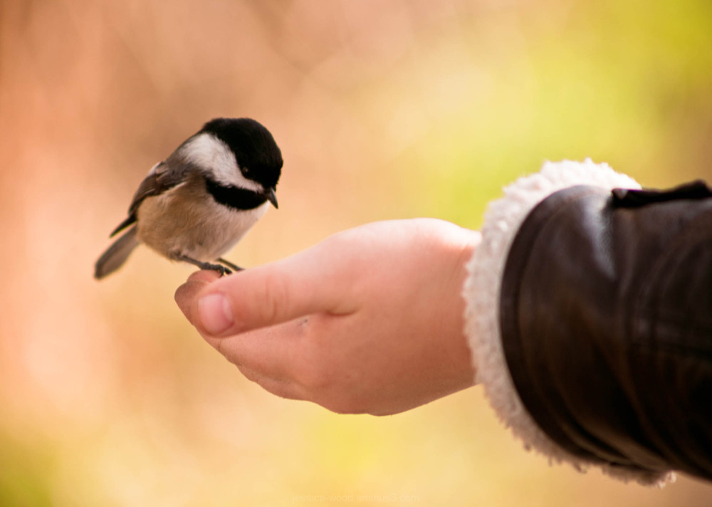 small bird eating seeds from a childs hand