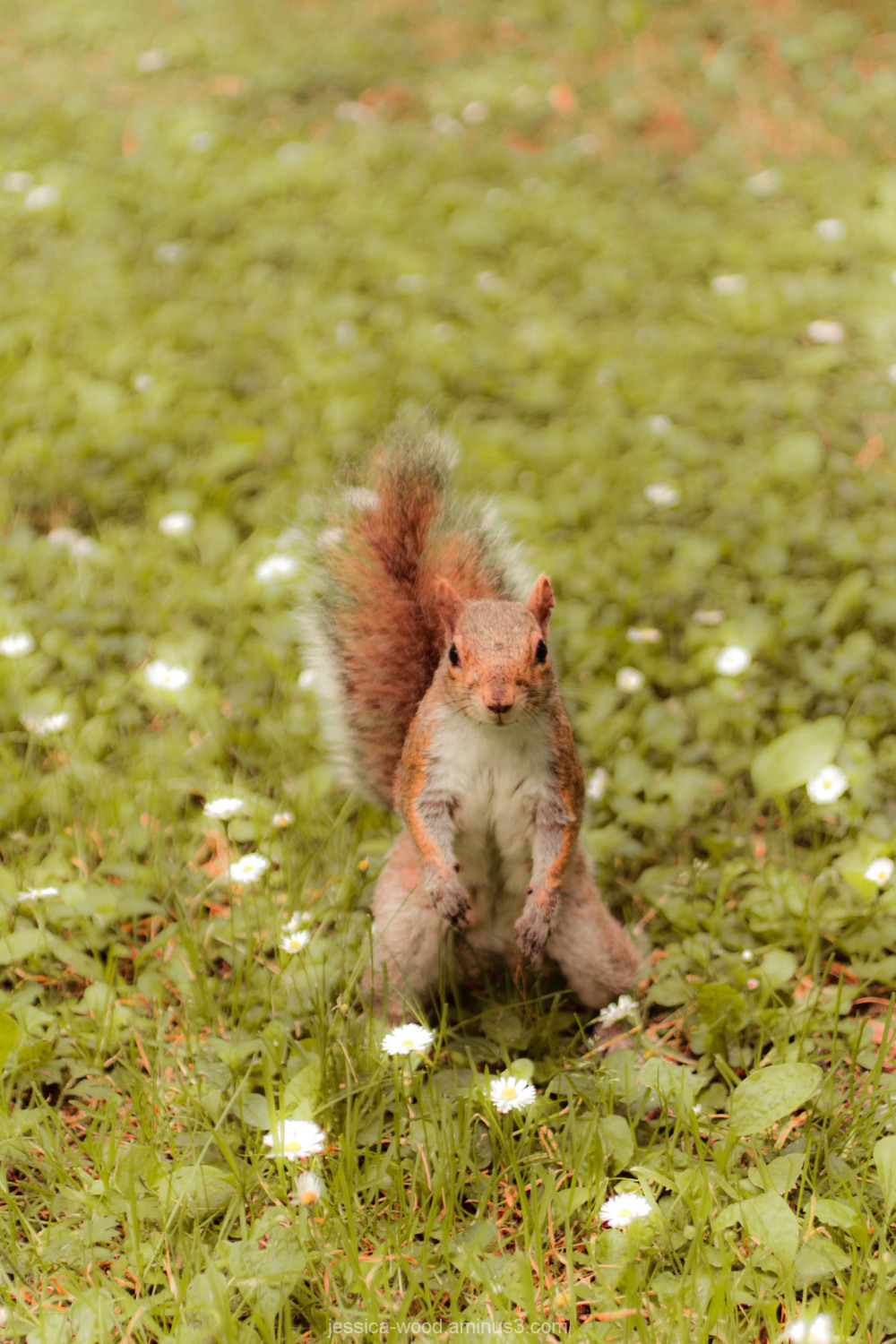 A squirrel poses for a camera in BC