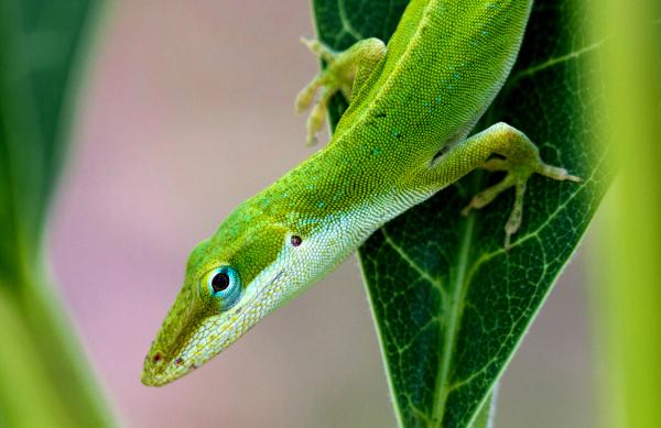 A Close-Up Photo of a Lizard