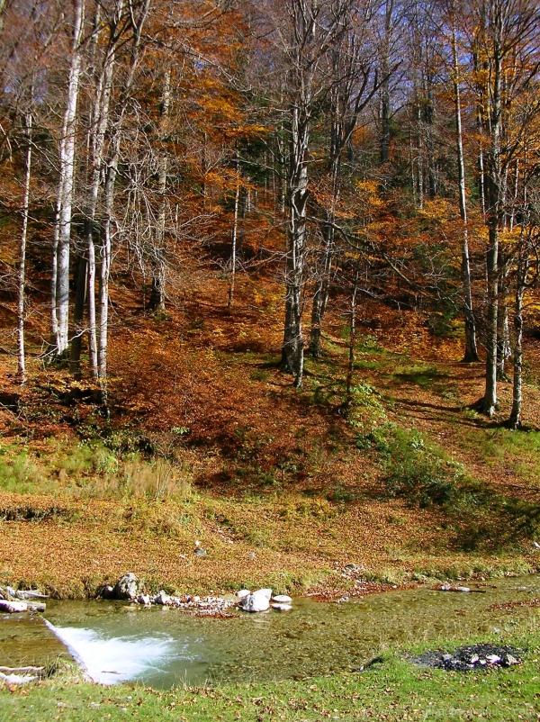 Busteni Autumn Valea_Cerbului