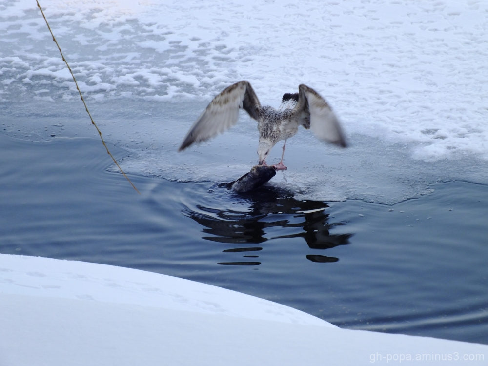Gone fishing (3)
