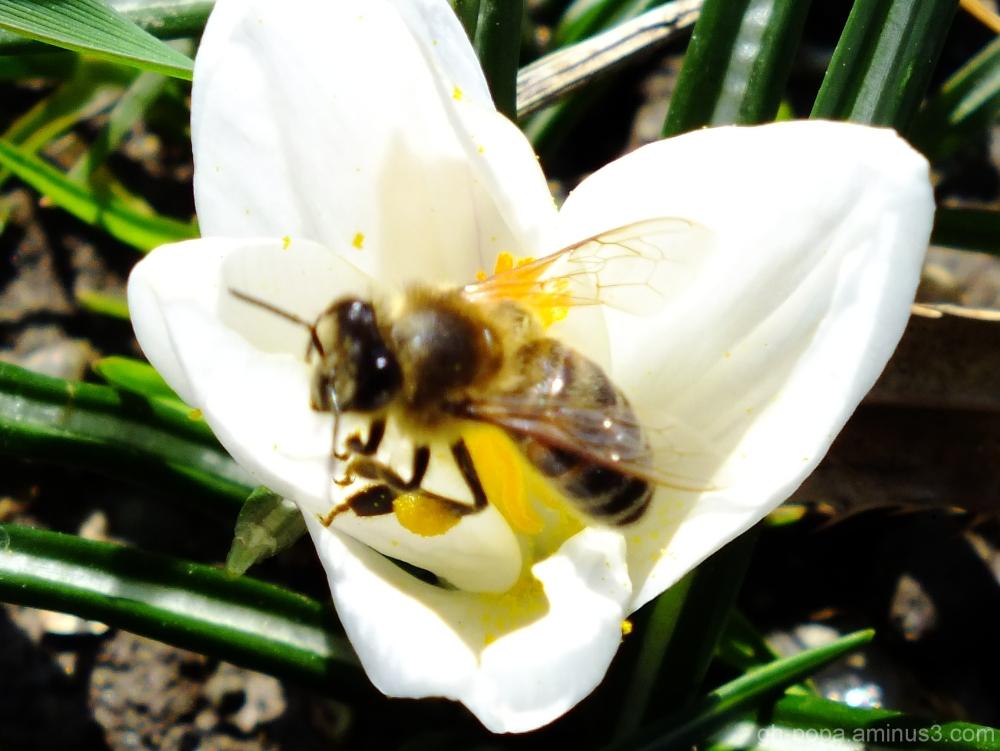 Spring #7