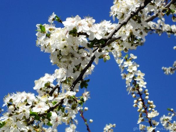 Spring #10